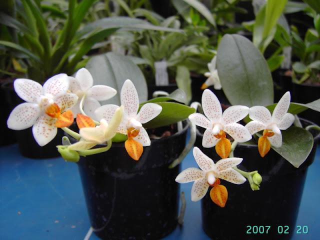 Растения из Тюмени. Краткий обзор - Страница 7 Photo57