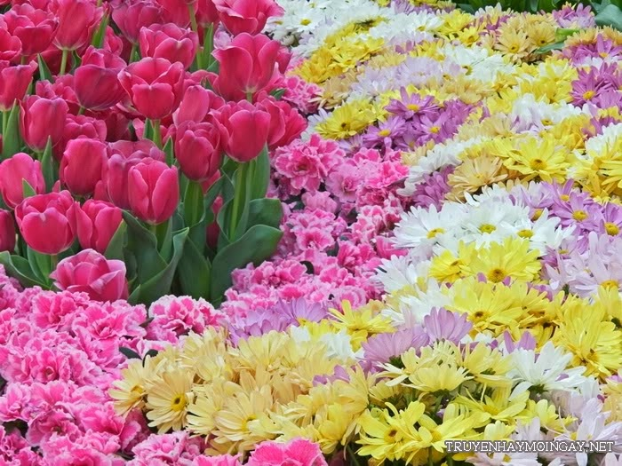 Những hình ảnh đẹp về hoa cho bạn ngắm mãi không biết chán P5