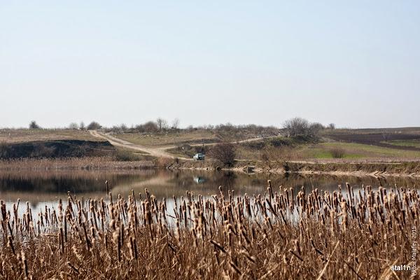 фото ставок в Бабині