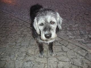 Black and white Sad Dog Photo - Sao Pedro de Moel