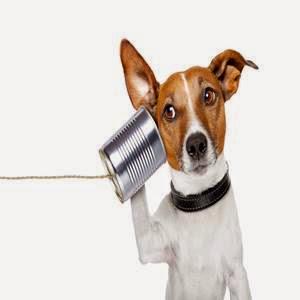Cachorro ouvindo no telefone sem fio