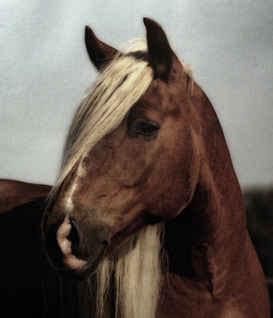 Златогривая лошадь