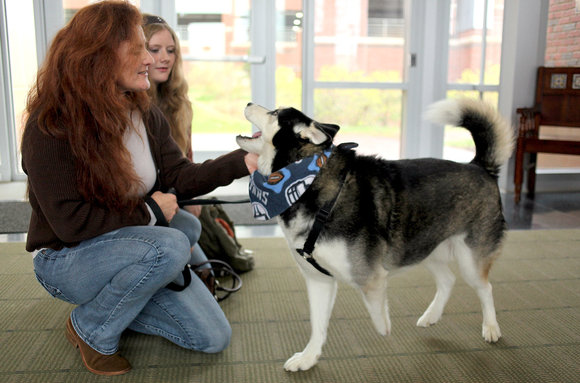 Husky to Receive New Wrist and Prosthetic Paw