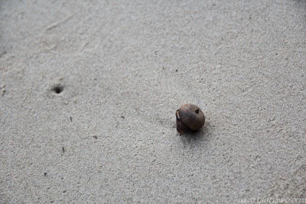 buah terdampai di pantai