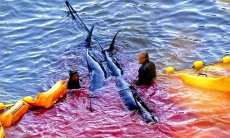 Rùng rợn nước biển chuyển thành màu máu ở Nhật Bản