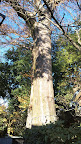 樹齢700年羽村市指定の天然記念物の欅の木@@@288@@@512