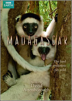 download Animal Planet Madagascar Ilha de Belas Riquezas Documentário