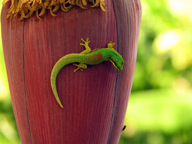 صور من مدغشقر Madagascar 14890840037