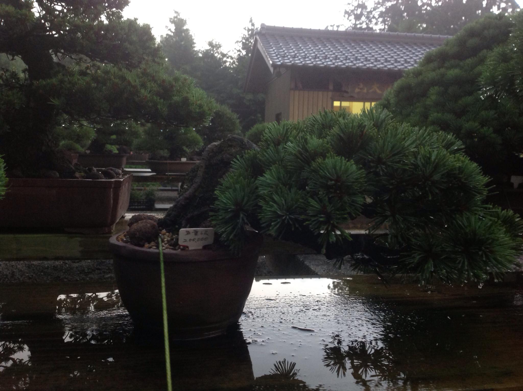 Saruyama Blog Further Along The Trip