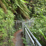 Short walkways in Blue Mountains NP (93481)