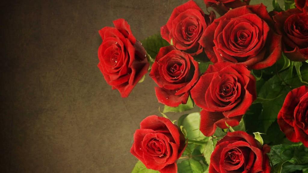hoa hồng nhung đẹp