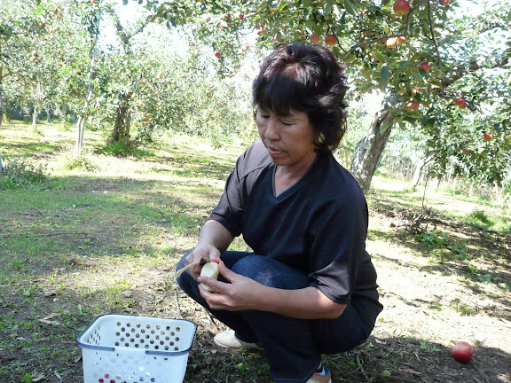 りんごの皮を剥く、中島さん