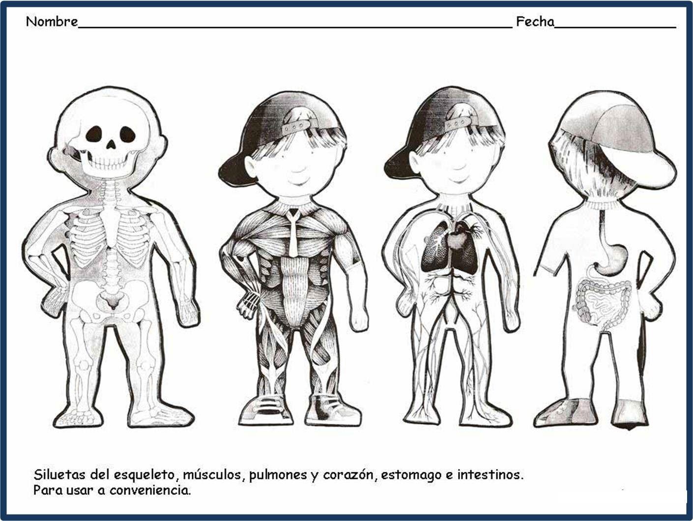 Excelente Cuerpo Humano Para Colorear Páginas Imprimibles Imágenes ...