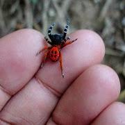 Сон укус паука