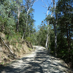 Sublime Point Trail east of Leura Falls Creek (318182)