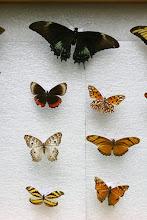 Encuentro Mariposas.