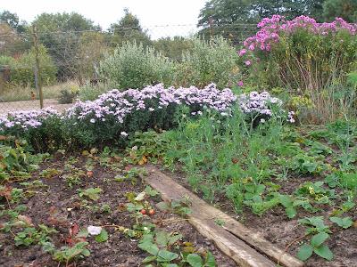 Herbstgarten in Gosen