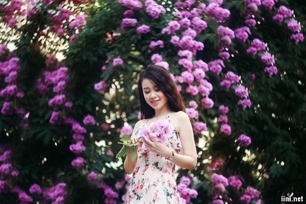 thơ hoa tím bằng lăng hay