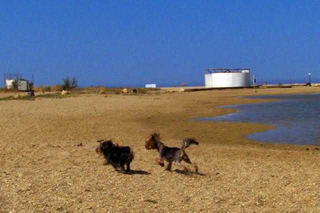 Отдых на море в Любимовке. Крым-2011 HPIM1182