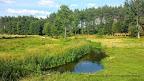 Na zdjęciu rzeka Czernica przy leśniczówce Dzików