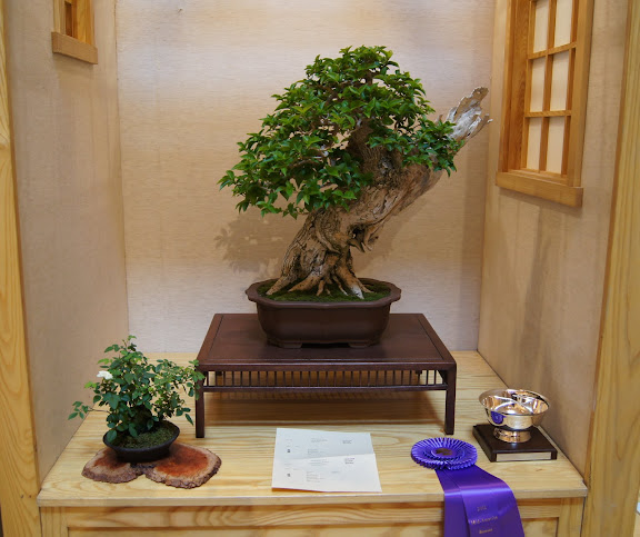 34th Midwest Bonsai Exhibition Chicago Botanical Garden