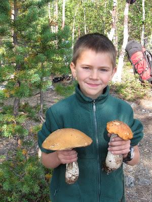 Тёма с грибами