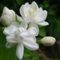 saurabh0151
