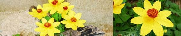 hoa+giay+10 Cách làm hoa trang trí đơn giản từ giấy