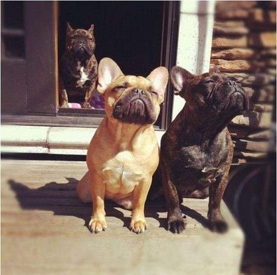 Tipos de cães
