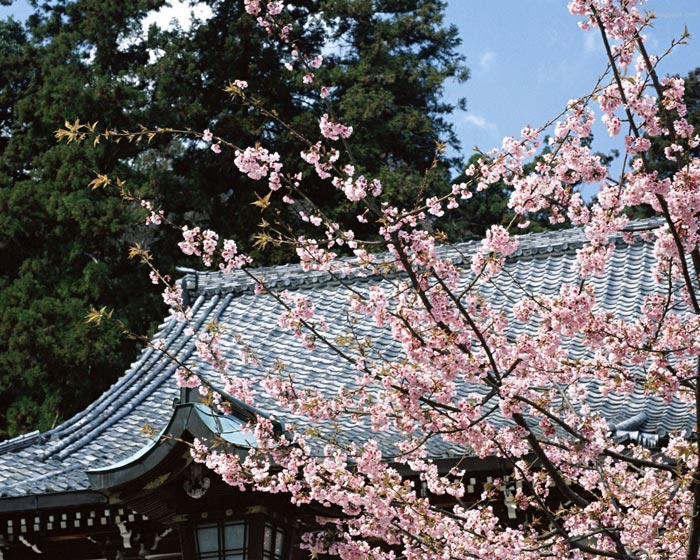 Top 10 Most beautiful places of japan April 2012