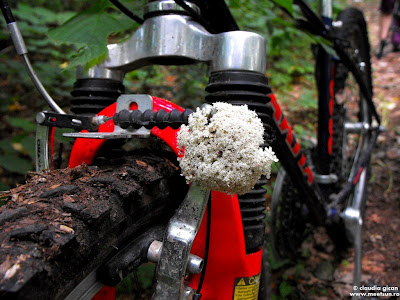 cu bicicleta in Padurea Comana