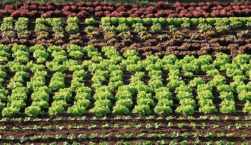 Vocabulario de geograf a tema 9 sector primario for Rotacion cultivos agricultura ecologica
