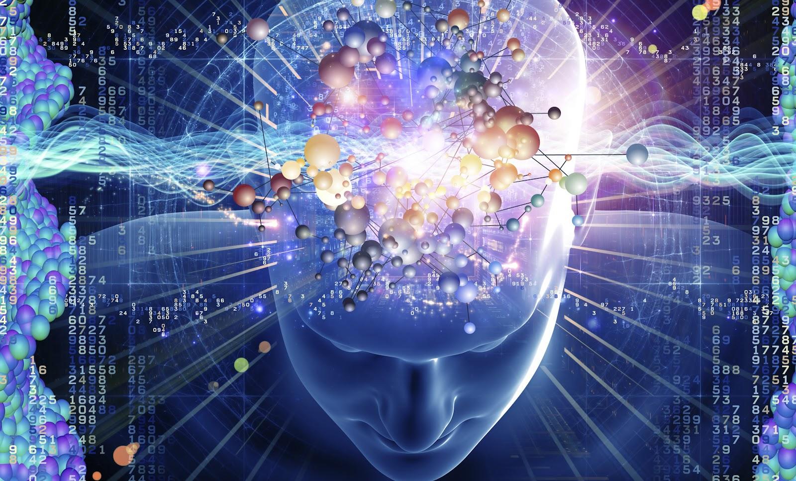 brain-evolution-orig-crop-1.jpg
