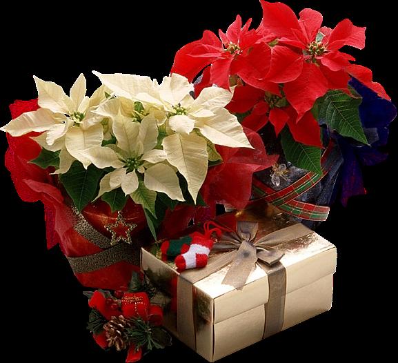 presentes -flores