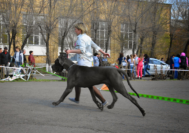 Кубок Аризоны-14(ПК)+ЧРКФ, Красноярск, 27 апреля 2014 DSC_5772