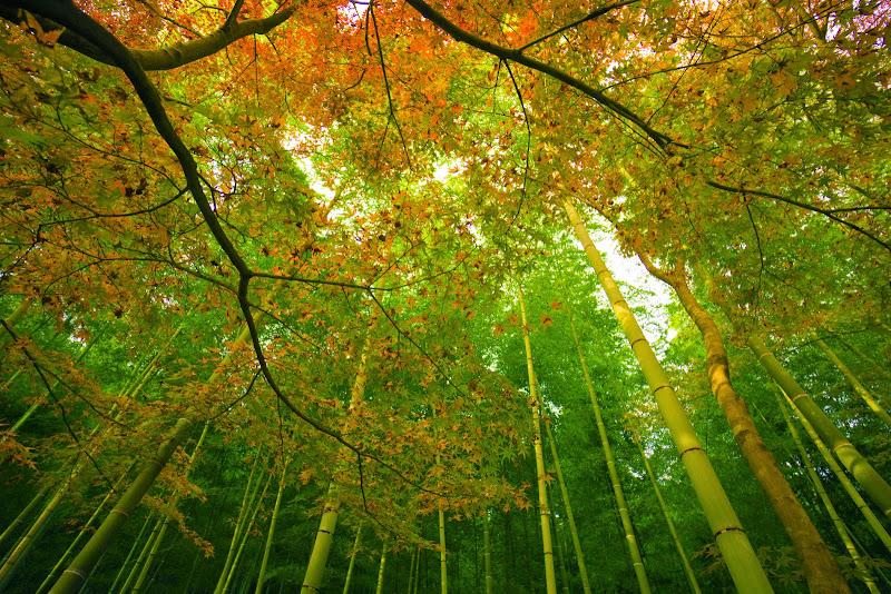 京都 紅葉 天竜寺 写真7