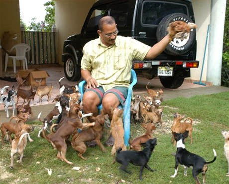 Royal Canin Chihuahua Junior сухой корм для щенков породы Чихуахуа