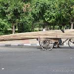 Livreur de perches en bambou, Delhi