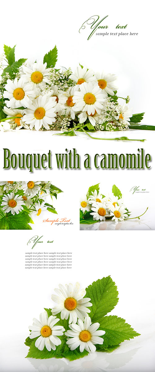 Stock Photo: Bouquet with a camomile