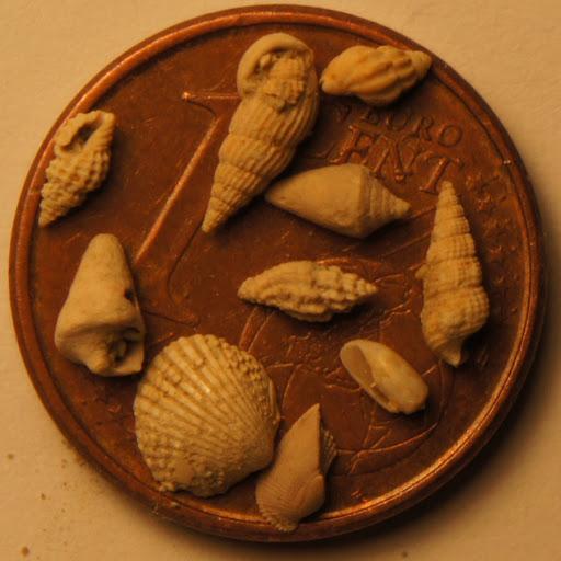 Lo que cabe en un céntimo Gasteropodos