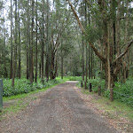 Road into Bungaree Bay campsite