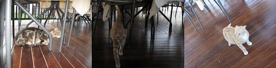 greckie kociaki walczą o teren
