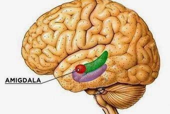 la-amígdala