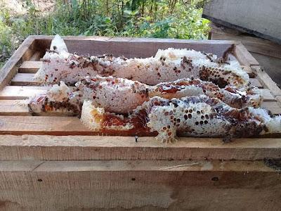 mật ong thật 100% tư nhiên nguyên chất