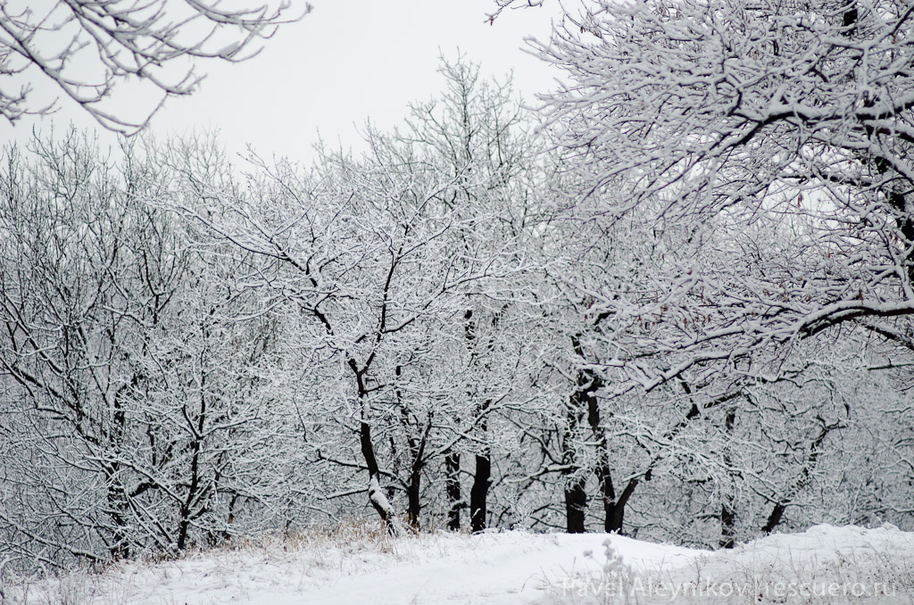 Зимний лес, тест объектива Юпитер 37А
