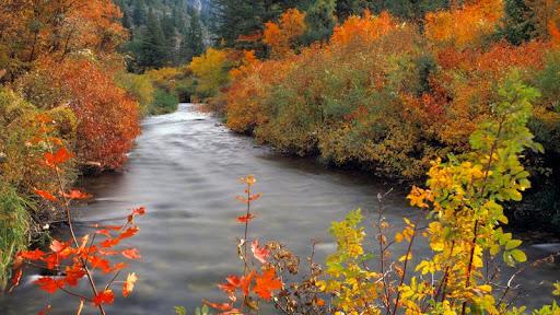 Palisades Creek in Autumn, Snake River Mountains, Idaho.jpg