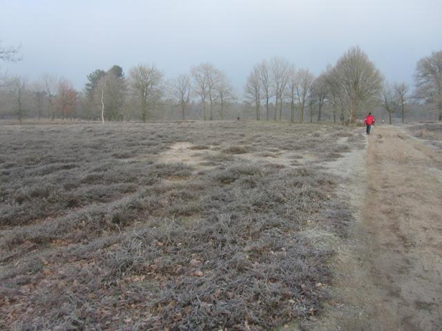 """100/110Km """"De Bossche Hondert"""": 27-28/01/2012  De%252520Bossche%252520100%252520082"""