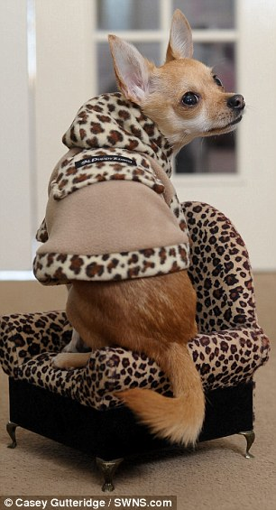 Would you spend more on your dog's outfits than your own?