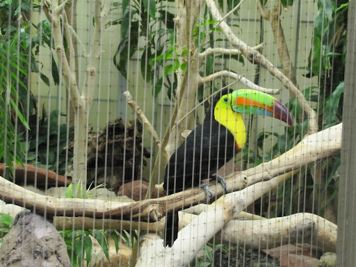 Keel Billed Toucan seen at the at the National Zoo in DC this past weekend.