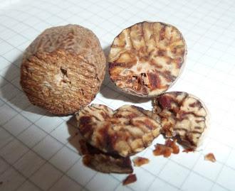 Gałka muszkatołowa - Myristica fragrans